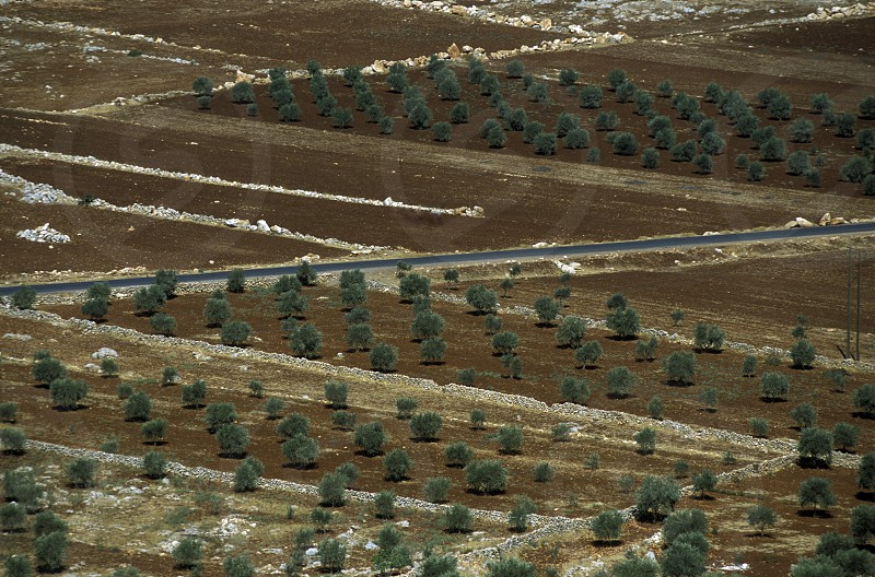 agriculture near the city of aleppo in Syria in the middle east photo