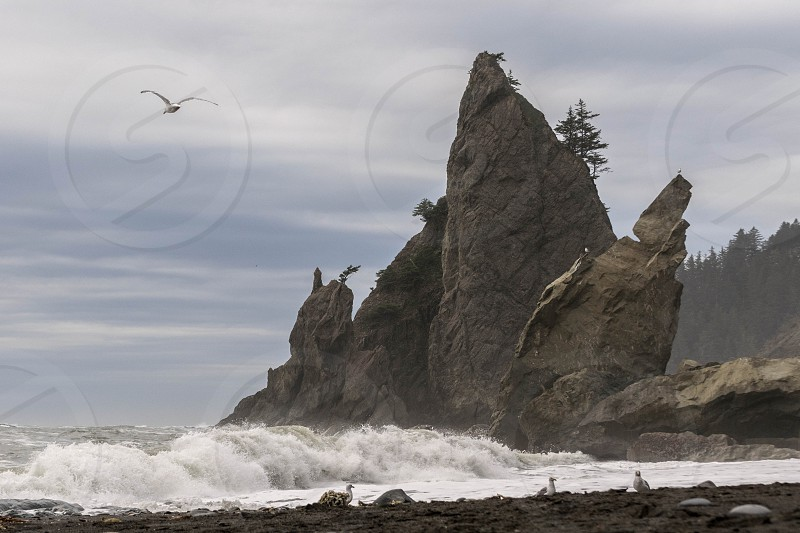 white flying bird near black rock formation on ocean during daytime photo