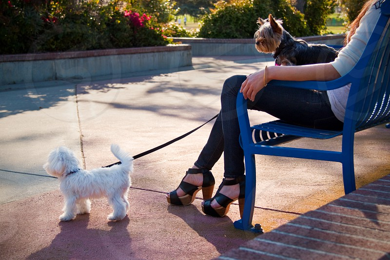 woman sitting holding 2 dogs photo