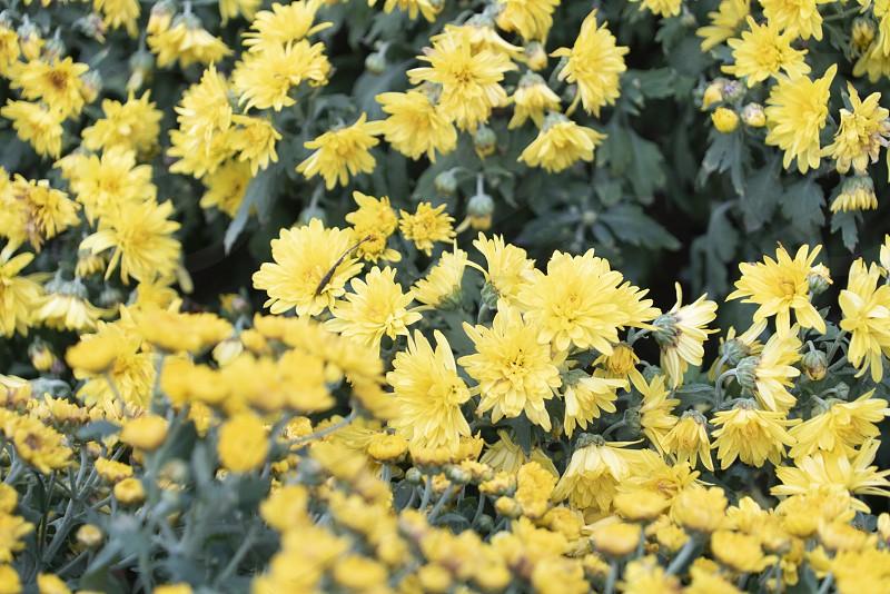 Colourful tropical flower close macro selective focus. photo