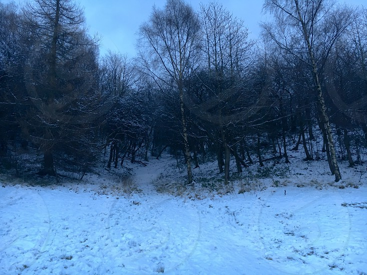 Snow Trees Winter Cold Ruchill Park MaryHill Glasgow Scotland UK.  photo