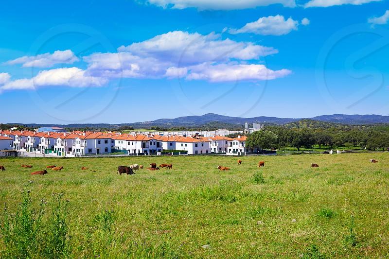 Real del Jara by Via de la Plata way in Spain at Andalusia photo
