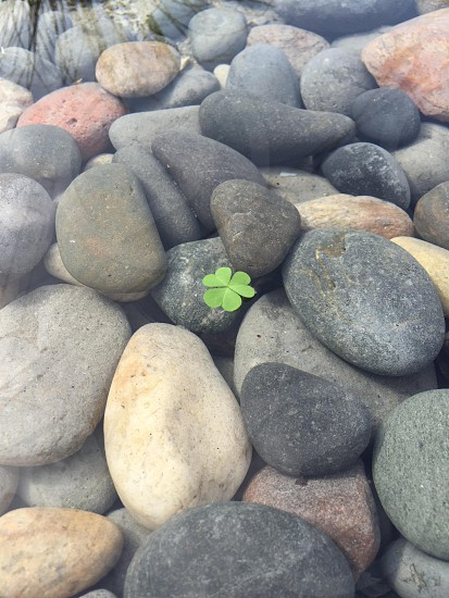 Shamrock peace water pebble Irish st pattys day st Patrick's  photo