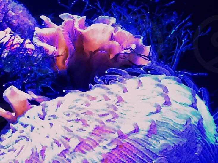 Plant sea ocean reef neon nature photo