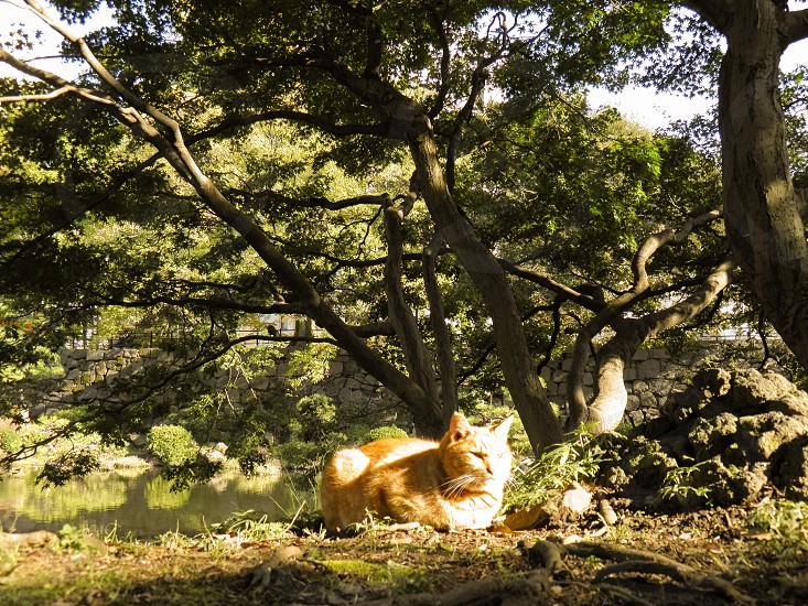 Cat in the park Tokyo Japan Hibiya Park photo