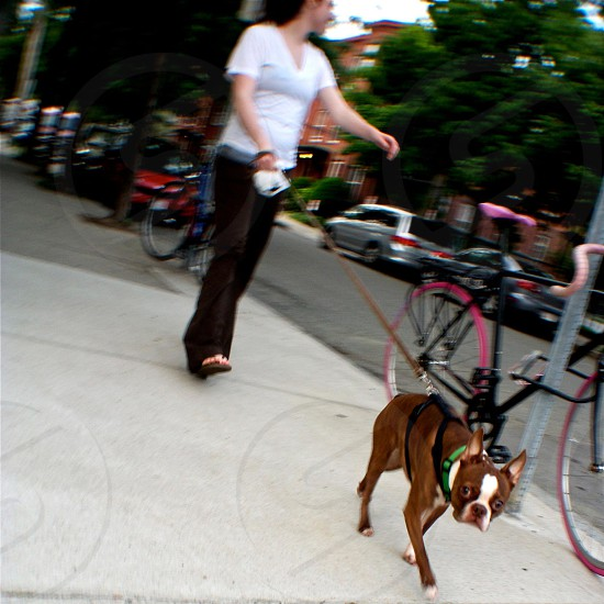 A doggy out for a walk.  photo