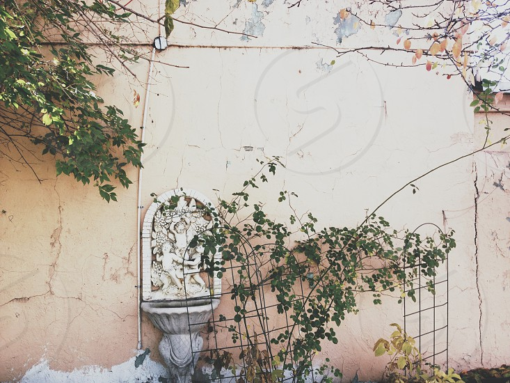 Vine-covered wall photo