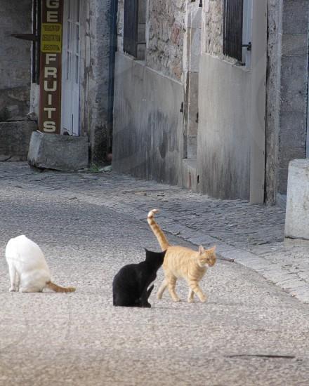 Cats at Rocamador France photo