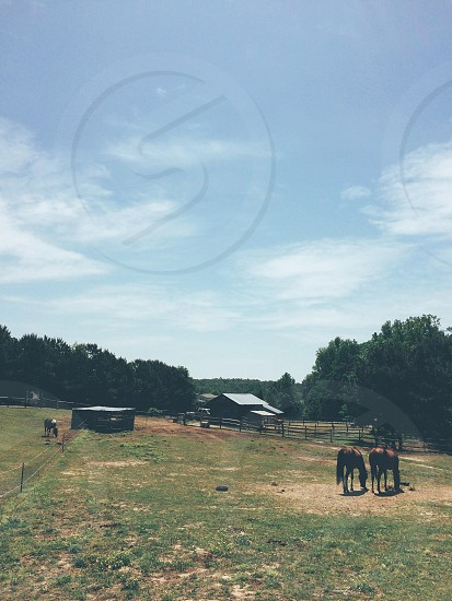 Horse farm in North Carolina photo