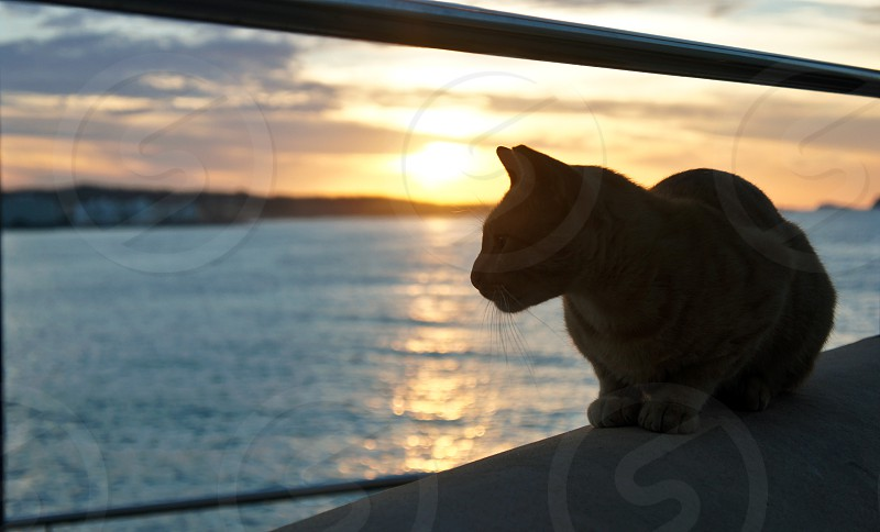 Sunset and a cat in Ibiza island photo