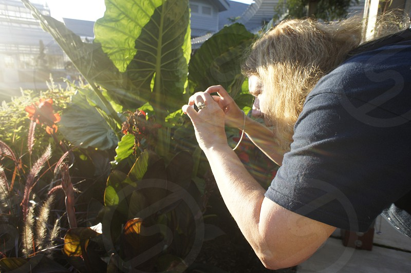 Photographing plants photo