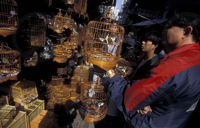 the Bird Market in the old Kowloon market in Hong Kong in the south of China in Asia. photo