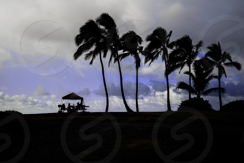 white clouds over silhouette of palm trees photo