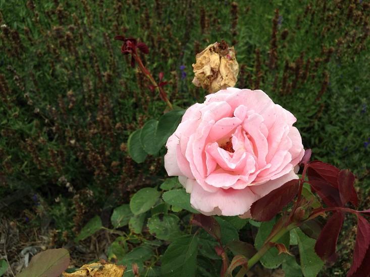 Very nice flower  photo
