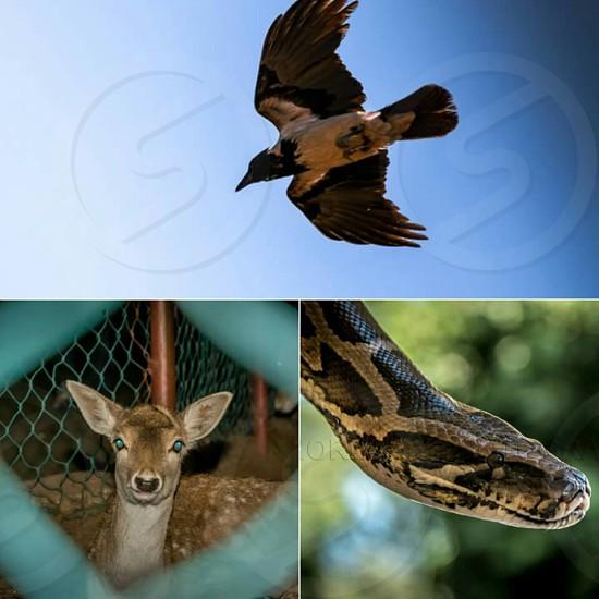 #wild #wildlife #animals photo