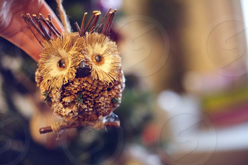 brown owl decor photo