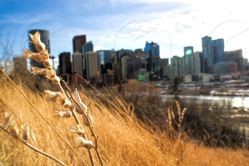 Calgary Inspirational Alberta Canada. photo