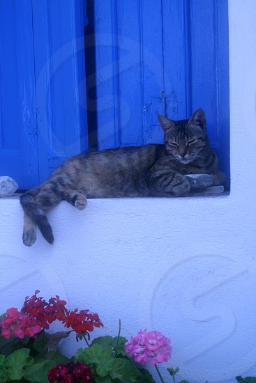 Mykonos Greece - Cat photo