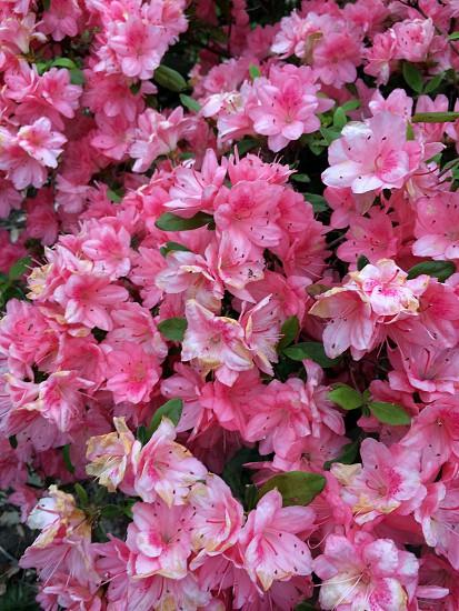Floral. Alexandria Virginia. 2014.  photo