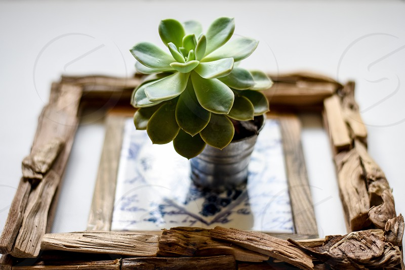 A green succulent pot plant placed in a wooden frame. photo