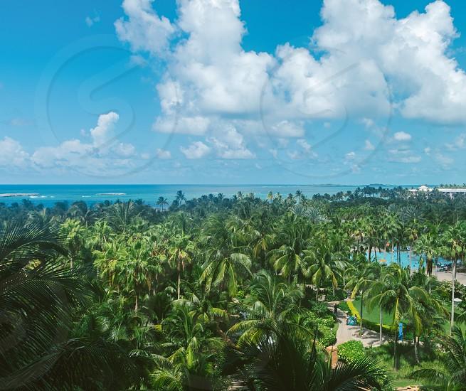 Palm Tree Galore in Nassau Bahamas photo