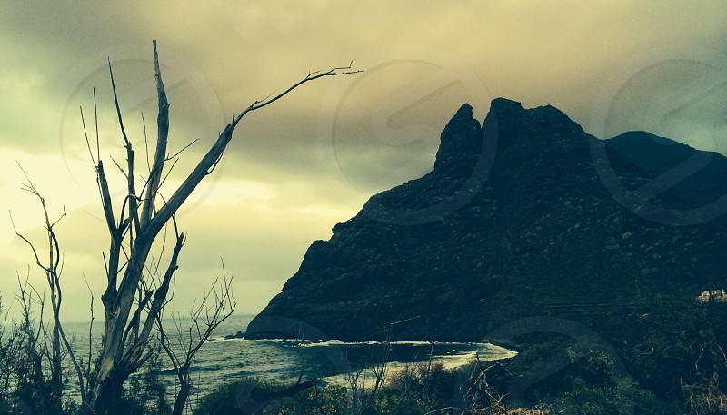 silhouette photo of baretree near sea shore photo
