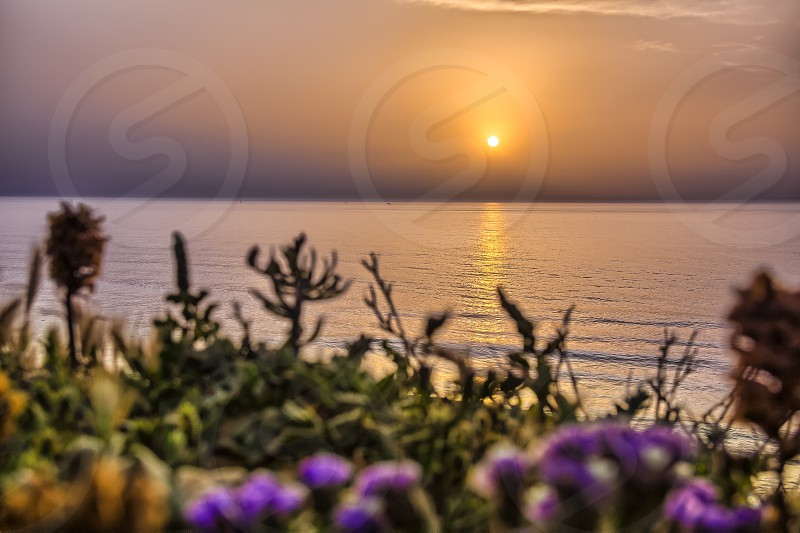 Serene golden sunset over the sea with the wild flowers. photo