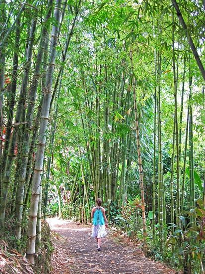 Bamboo forest Maui Hi photo