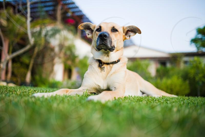 grass lawn garden dog photo