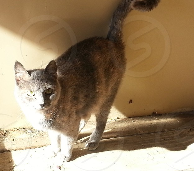 Grey momma cat. Feline meow animal photo