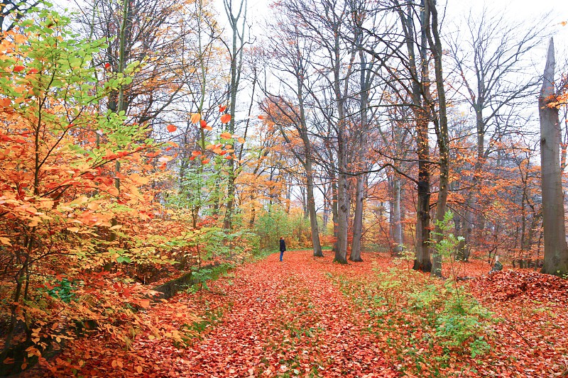 Autumnal autumn season fall season  forest woods orange colored red leaves colors colorful nature  person photo