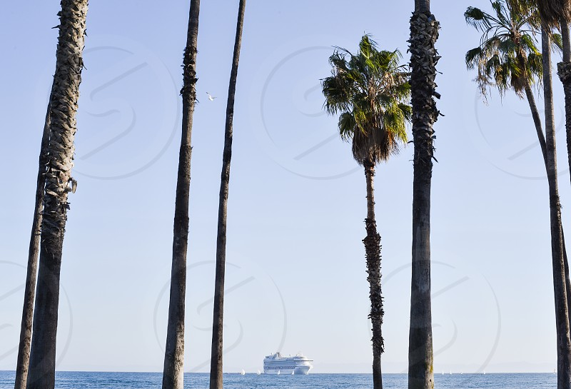 ocean tourism palm trees beach cruise ship california sea boat cruise photo