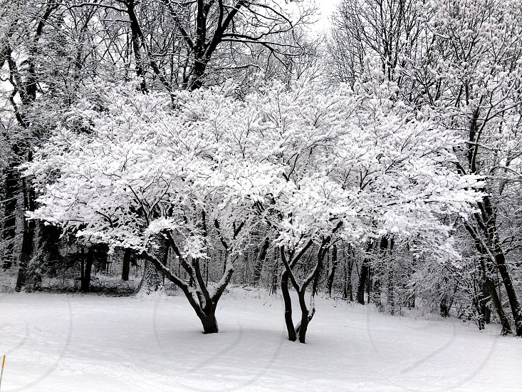 white snowy forest photo