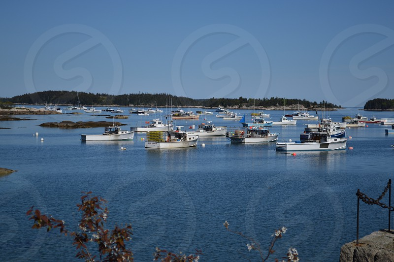 lobster boats beautiful blue cove Maine summer photo