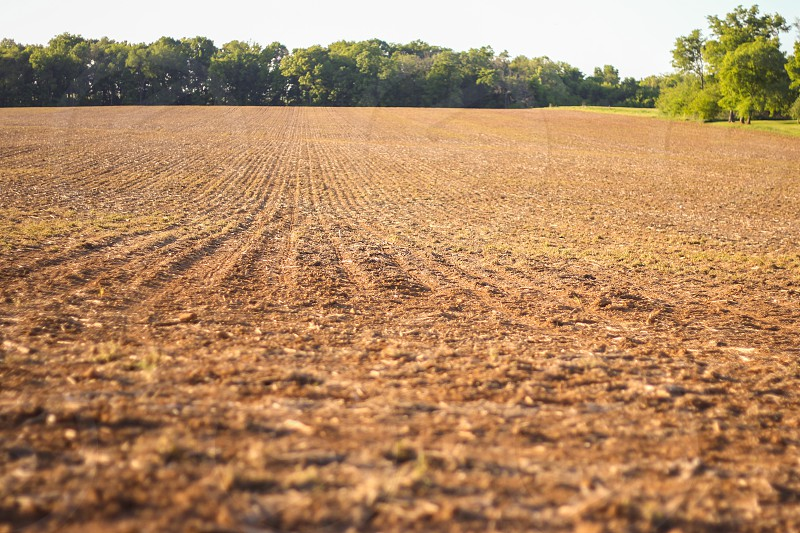 Crop Field Barren photo