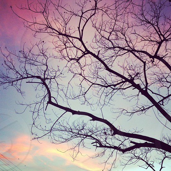 tree silhoutte  photo