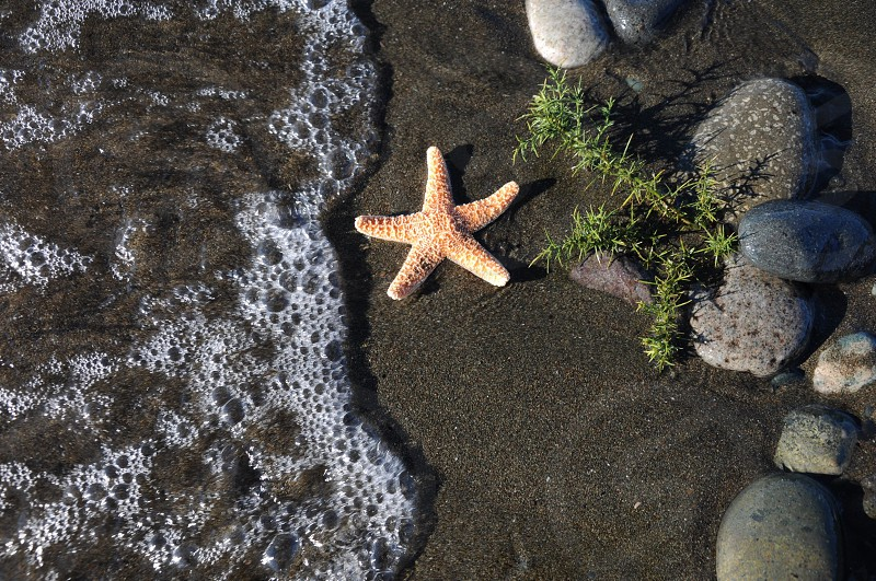 orange starfish on sand near water's edge photo