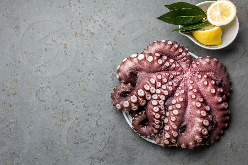 Seafood octopus. Whole fresh raw octopus on with lemon and laurel gray slate background top view. photo