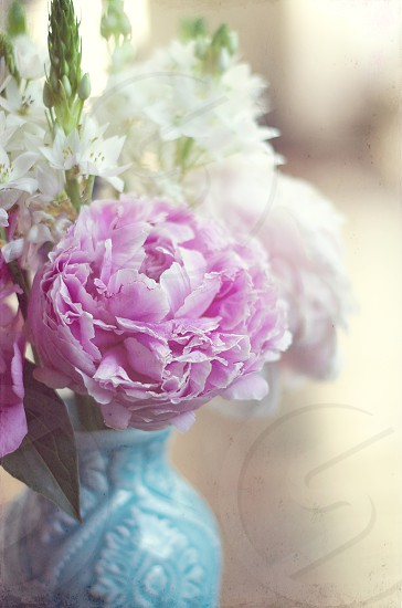 Peonies Flowers pastels photo