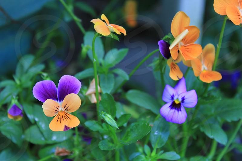 Flower green purple bright garden spring floral plant  photo