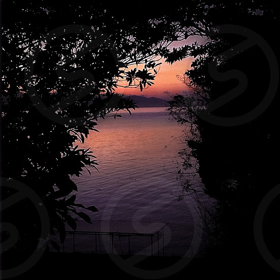 overhang of trees near body of water at purple sunset photo