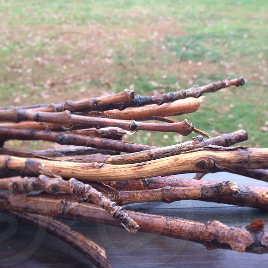 A bundle a wet sticks for a campfire with grass in the background. photo