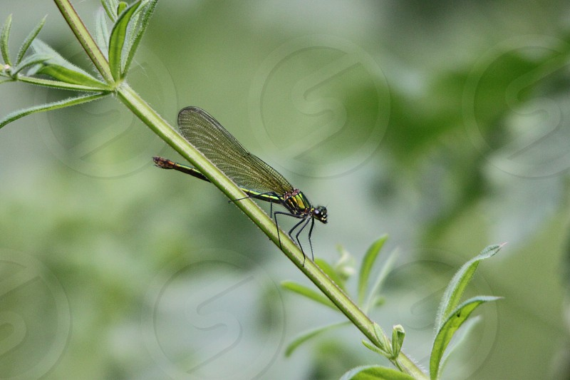 black and yellow dragonfly on green leave macro photography photo