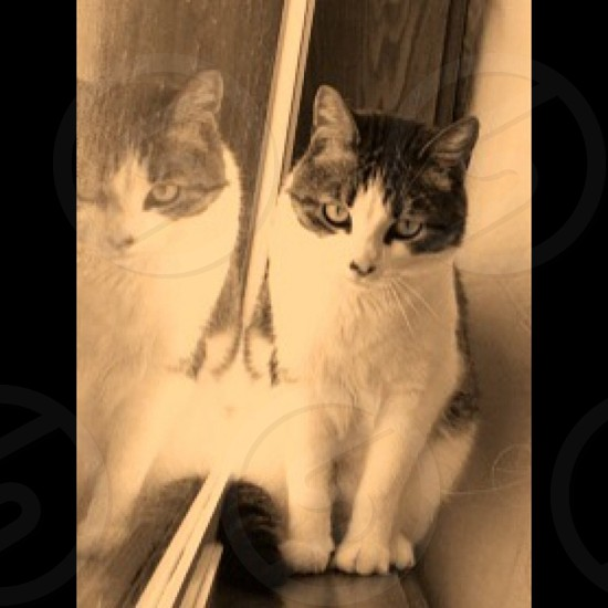 Kitty Glare ✅ photo