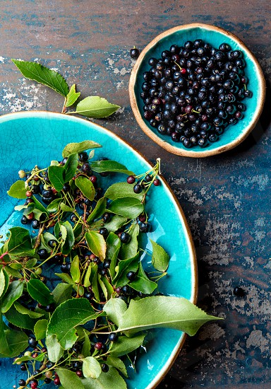 Superfood MAQUI BERRY. Superfoods antioxidant of indian mapuche Chile. Bowl of fresh maqui berry and maqui berry tree branch on metal background top view photo