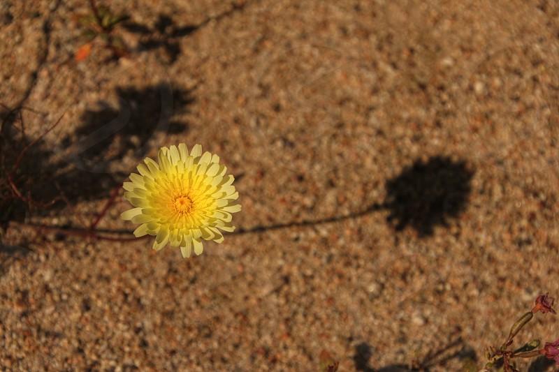 yellow flower on brown ground photo
