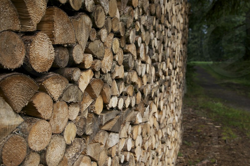 wood pile forest outdoors photo