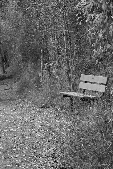 Bench along the trail photo