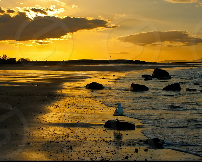 Golden sunset over water. photo
