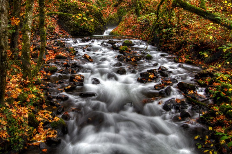 HDR Landscape Falls Autumn  Nature  Oregon Portland  Bridal Veil Fall PNW Pacific Northwest Long Exposure  Creek Water Waterfall photo